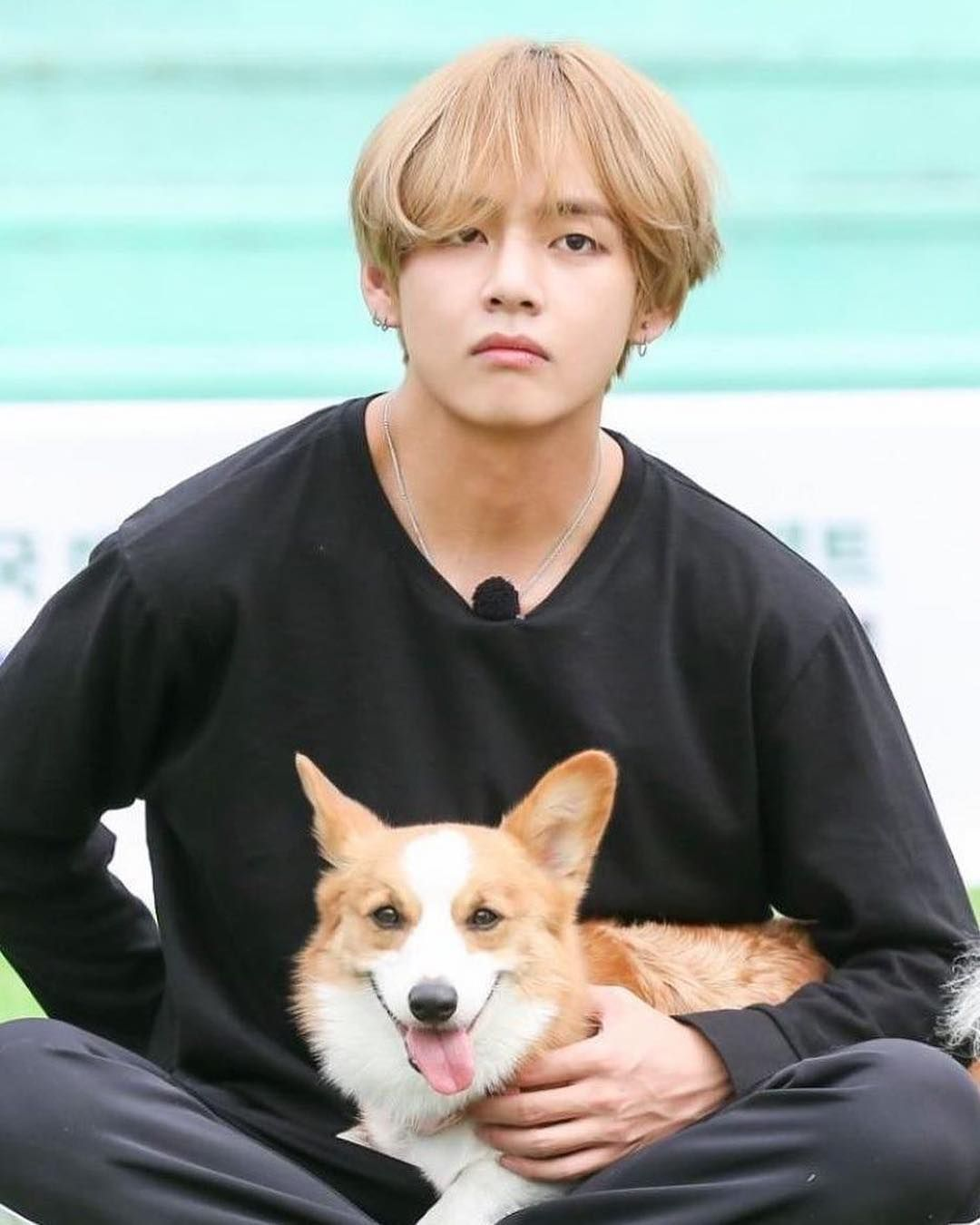 Do You Have Any Pet Bts Taehyung Taehyung Bts Jungkook