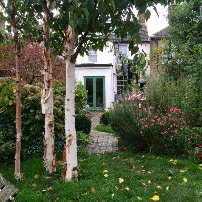 The 8 best perfect-for-privacy garden trees | Small garden ...