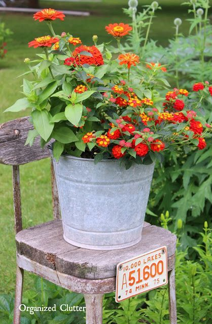 Image Result For Orange Lantana Potted Plants Container Gardening Flowers Container Flowers Garden Containers