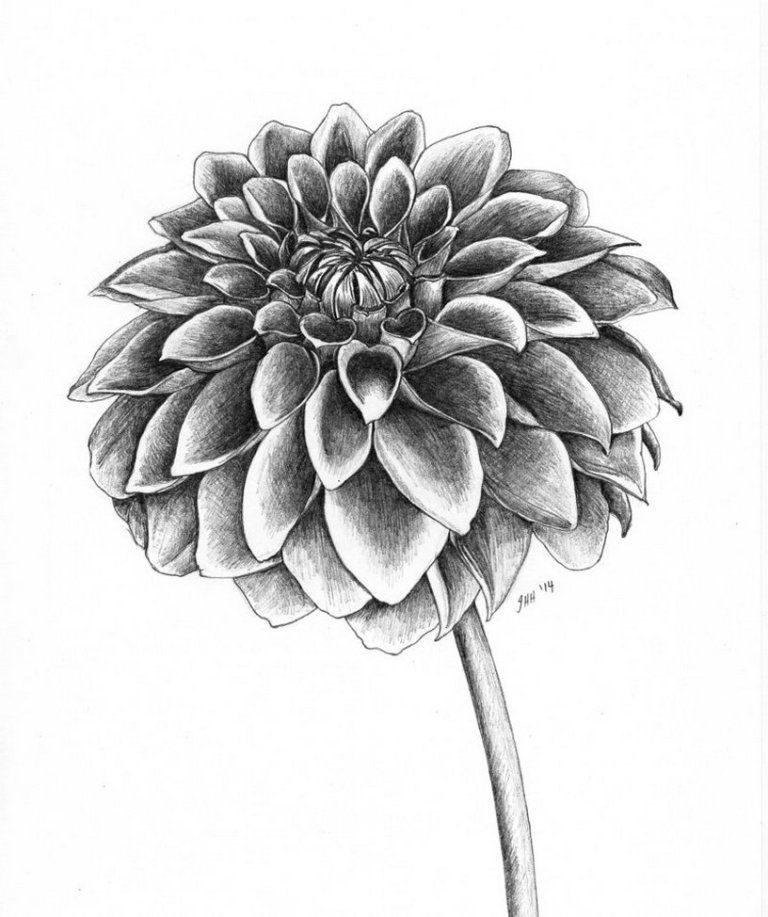 Dahlia Flower Tattoo Awesome Ideas 24 We Otomotive Info Awesome Compasstattoo Dahlia In 2020 Dahlia Flower Tattoos Pencil Drawings Of Flowers Flower Drawing