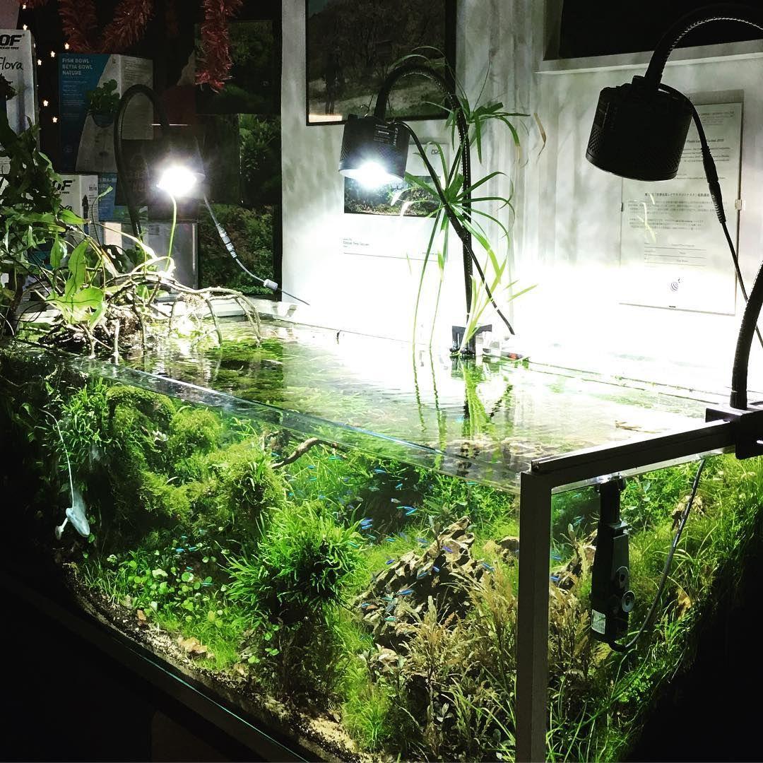 Nature Aquarium En Estado Puro Pzes Kessil Ada Iaplc Susswasseraquarium Aquarien Aquarium