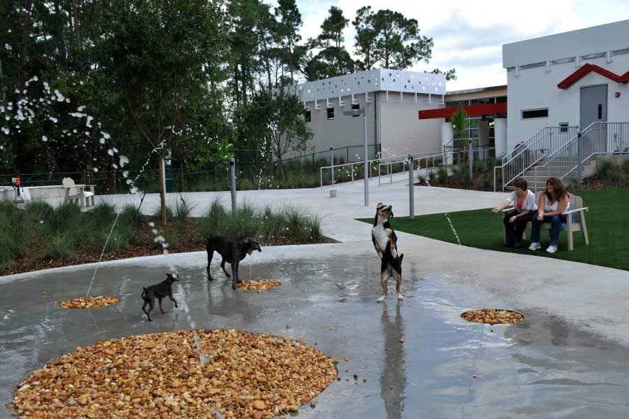 Ideas Hanscom Park Renewal Pet Resort Luxury Pet Luxury Dog