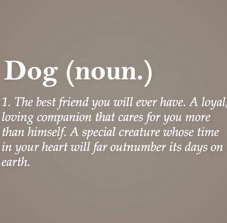 Dog Best Friend Quotes Image result for definition best friend quotes: DOG | For the dogs  Dog Best Friend Quotes