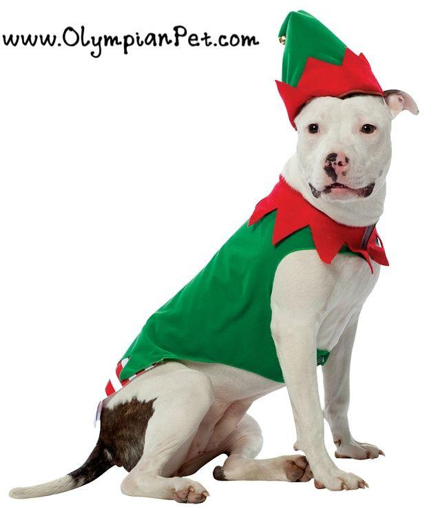 http://olympianpet.com/Elf-Dog-Costume-_p_3006.html