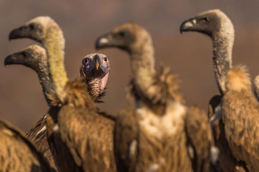 Las 31 mejores imágenes de aves alrededor del mundo