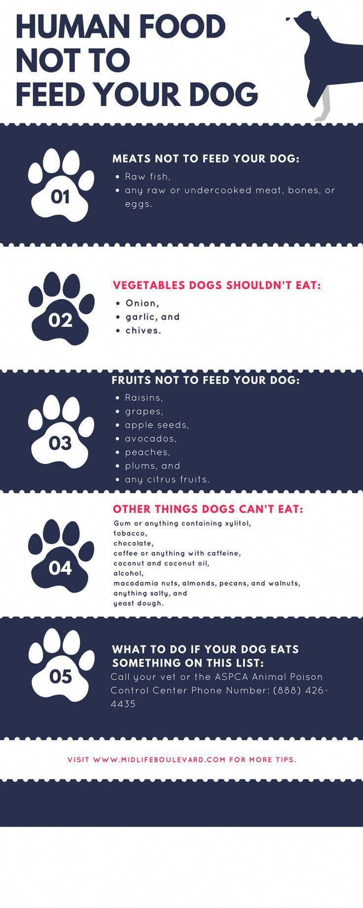 Human food you must absolutely not feed your dog. Pet