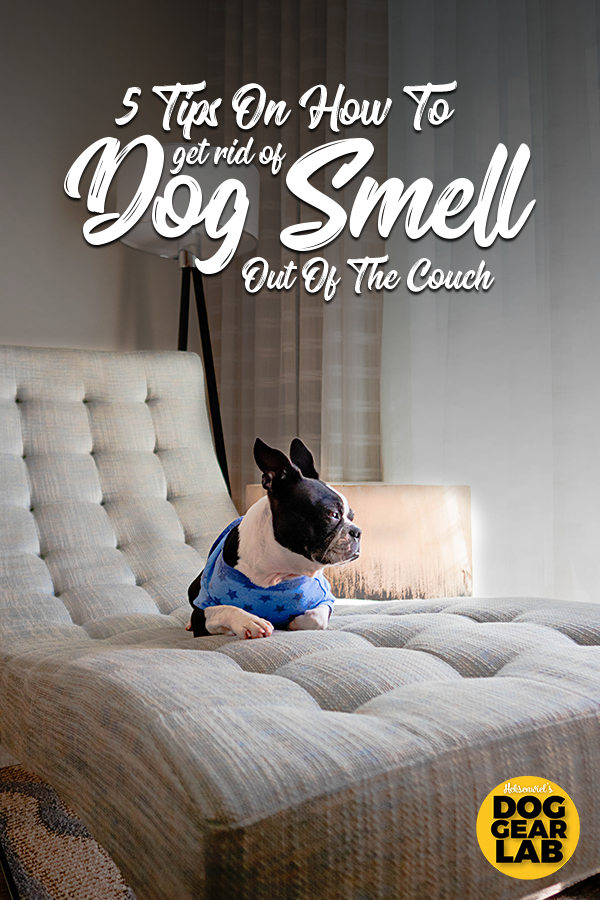 5 Tips On How To Get Dog Smell Out Of The Couch Dog Smells Pet Smell Dog Gear
