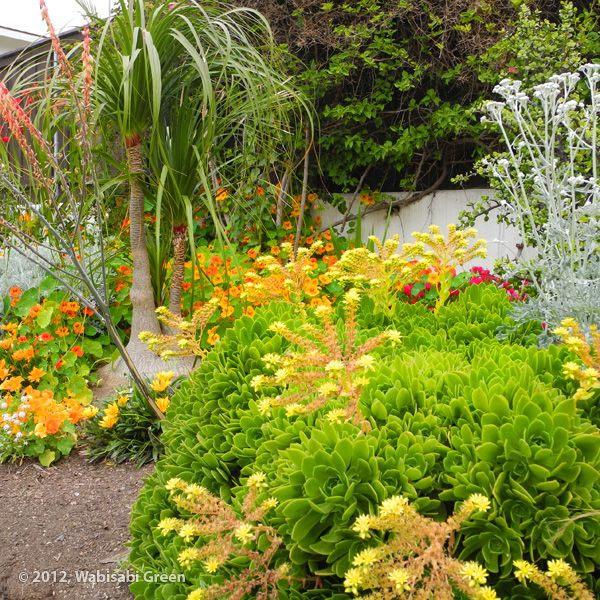 Drought Tolerant Landscaping Photos: Pin By Michelle Touceda On Desert Landscaping