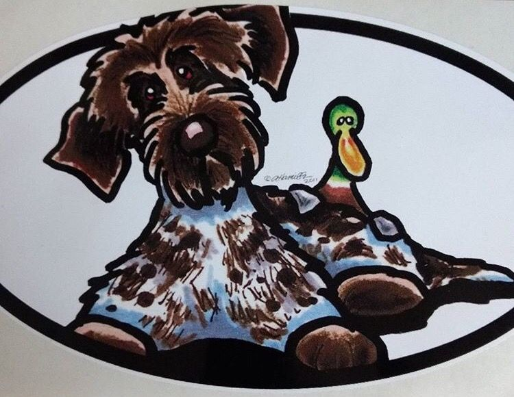 Wirehaired Pointing Griffon Puppies For Sale Australia 2021