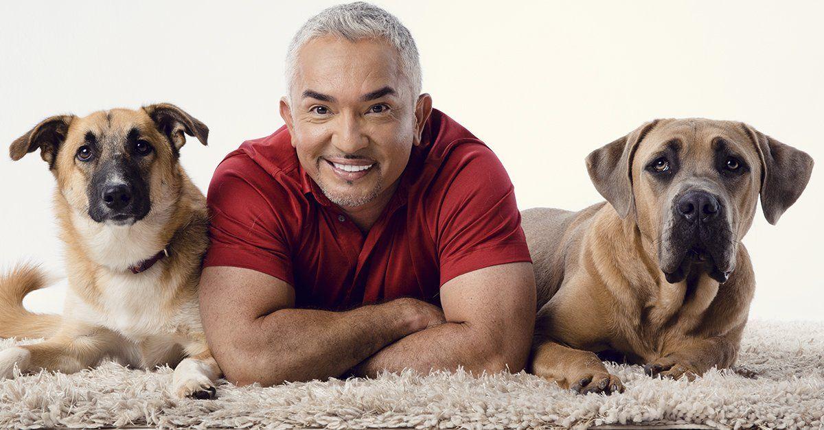 Photo of César Millán explica por qué los perros callejeros son mejores mascotas