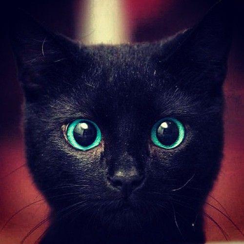 black cat with blue eyes Χαριτωμένα ζώα, Γατούλα και