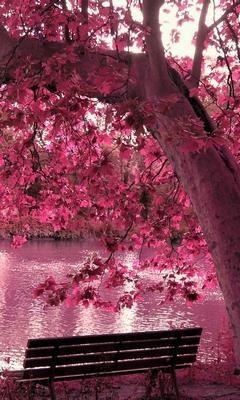 beautiful pink tree