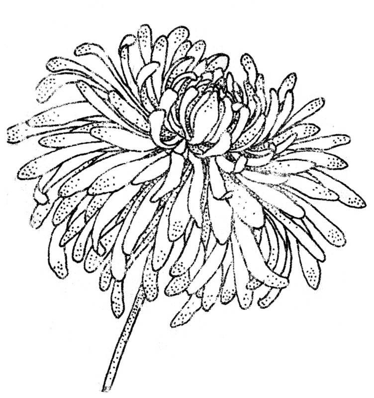 crysant | Bocetos | Pinterest | Dibujo de flores, Flores y Bordado