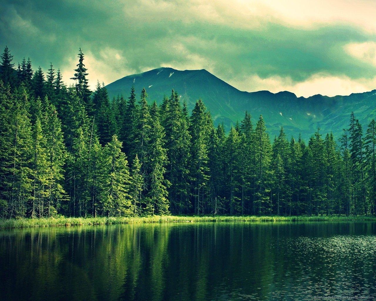 mountains pine trees - photo #9