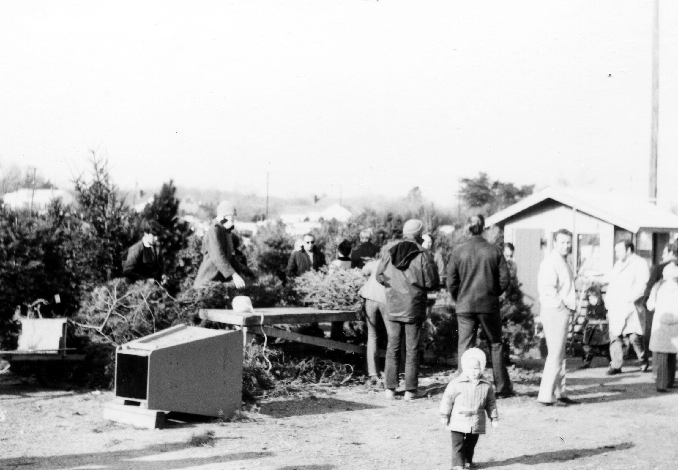 1971. Customers Christmas Trees. 160 Years Of