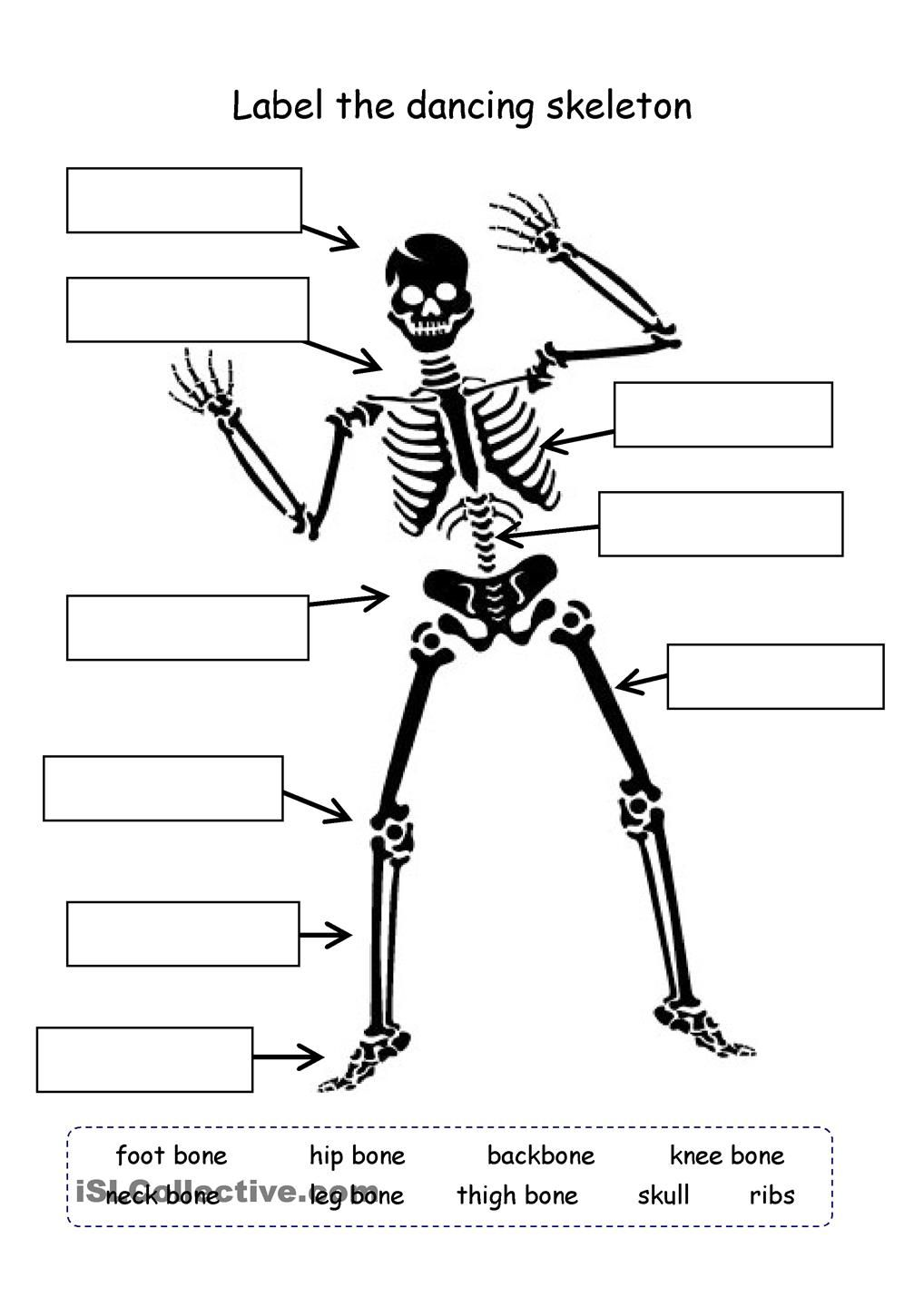 small resolution of Label the skeleton   Science worksheets