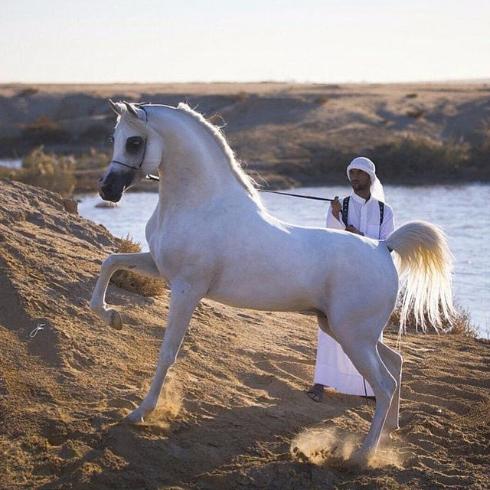 【画像】馬の風景を置いておきます