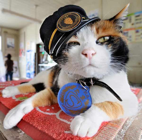 和歌山電鉄貴志川線・貴志駅の「たま」駅長=2008年5月、和歌山県紀の川市 和歌山電鉄は15年6月24日、ネコの駅長と…