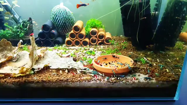 Mix Shrimptank With A Guppy Pair Video Fish Tank Plants Fish Tank Themes Aquarium Fish