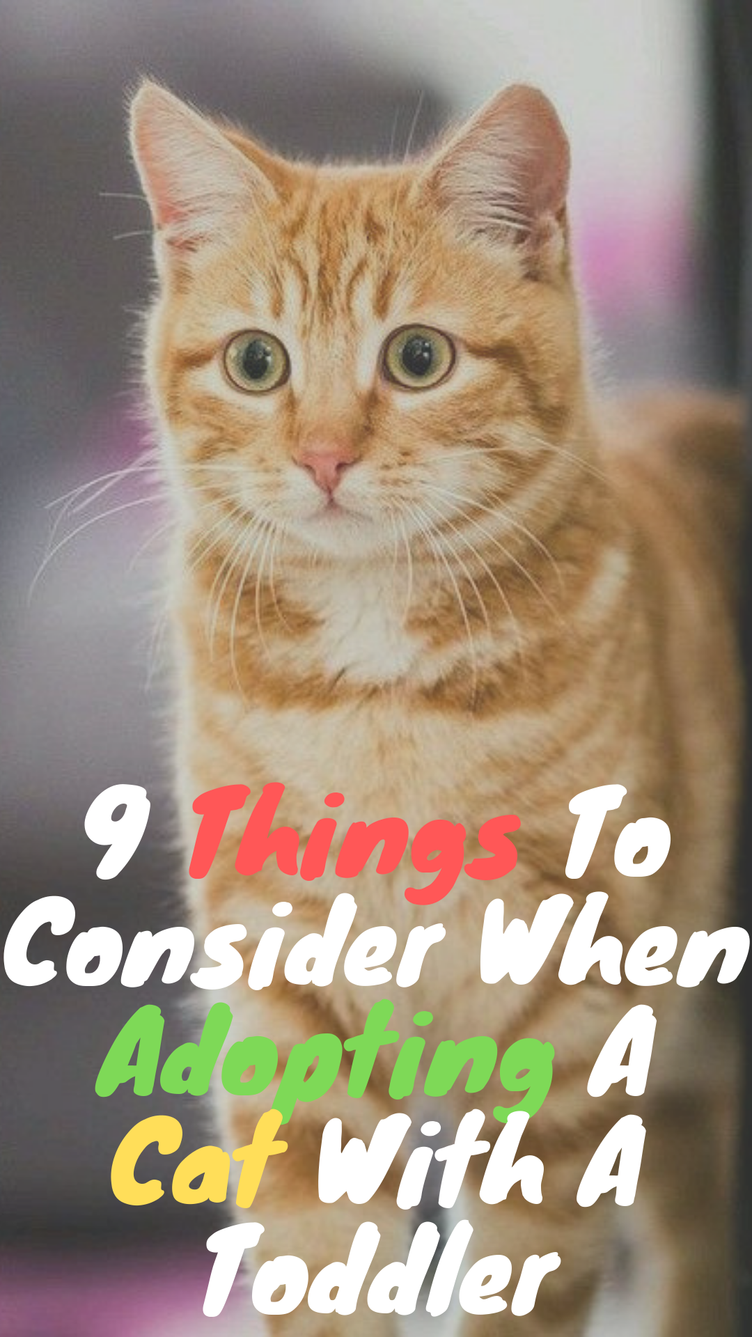When You Have Toddlers And Infants There Are Various Elements To Consider If You Re Planning To Add A Cat To Your Family Researc Cat Adoption Funny Cats Cats