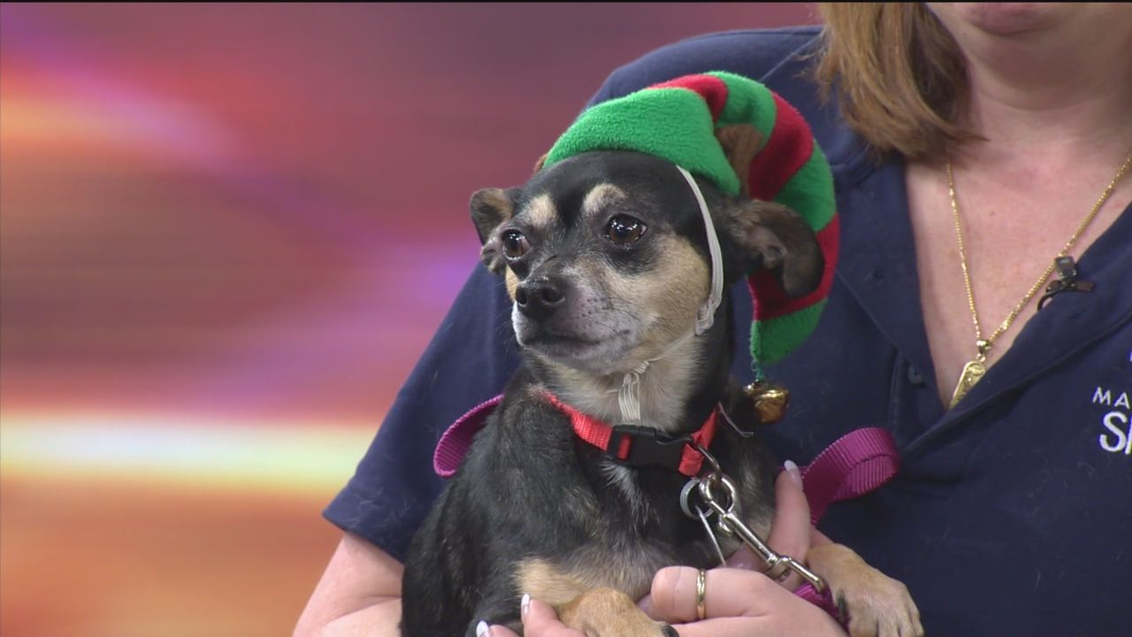 The Maryland SPCA has so many pets up for adoption