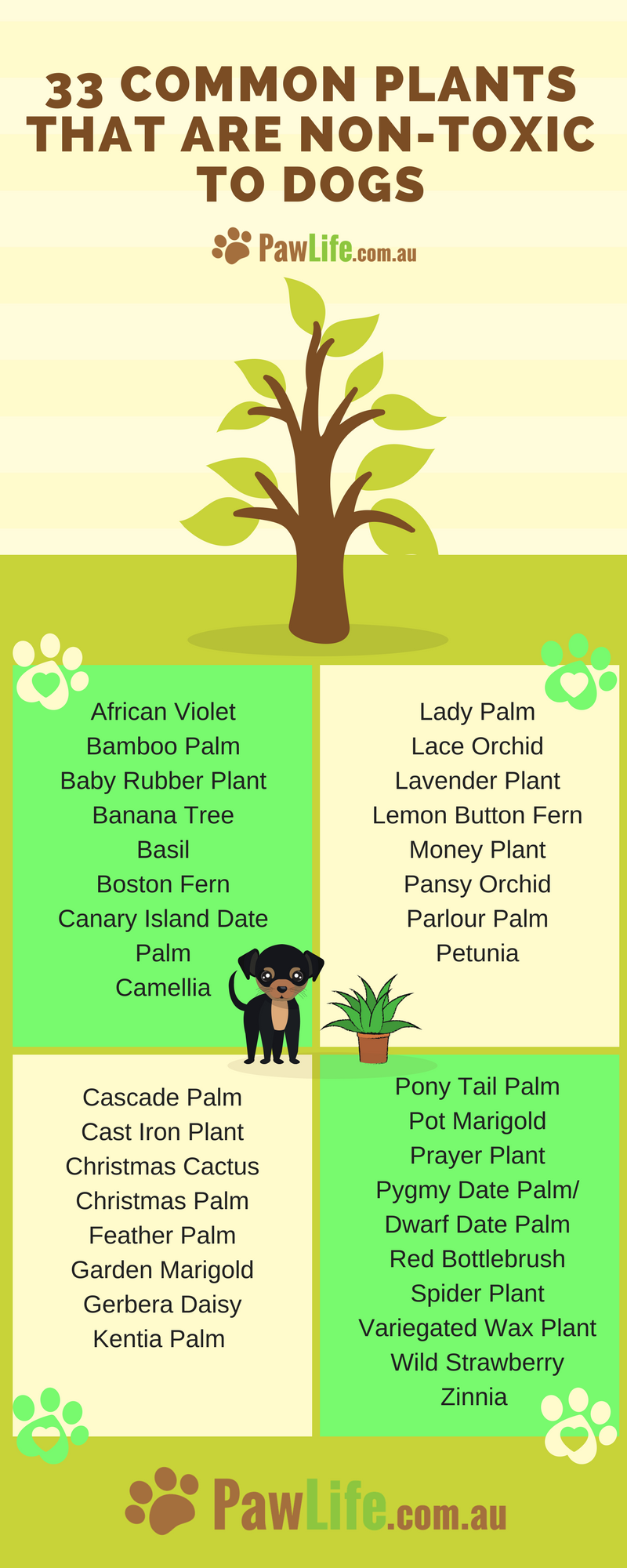 33 Common Plants That Are Non Toxic To Dogs With Images Dog