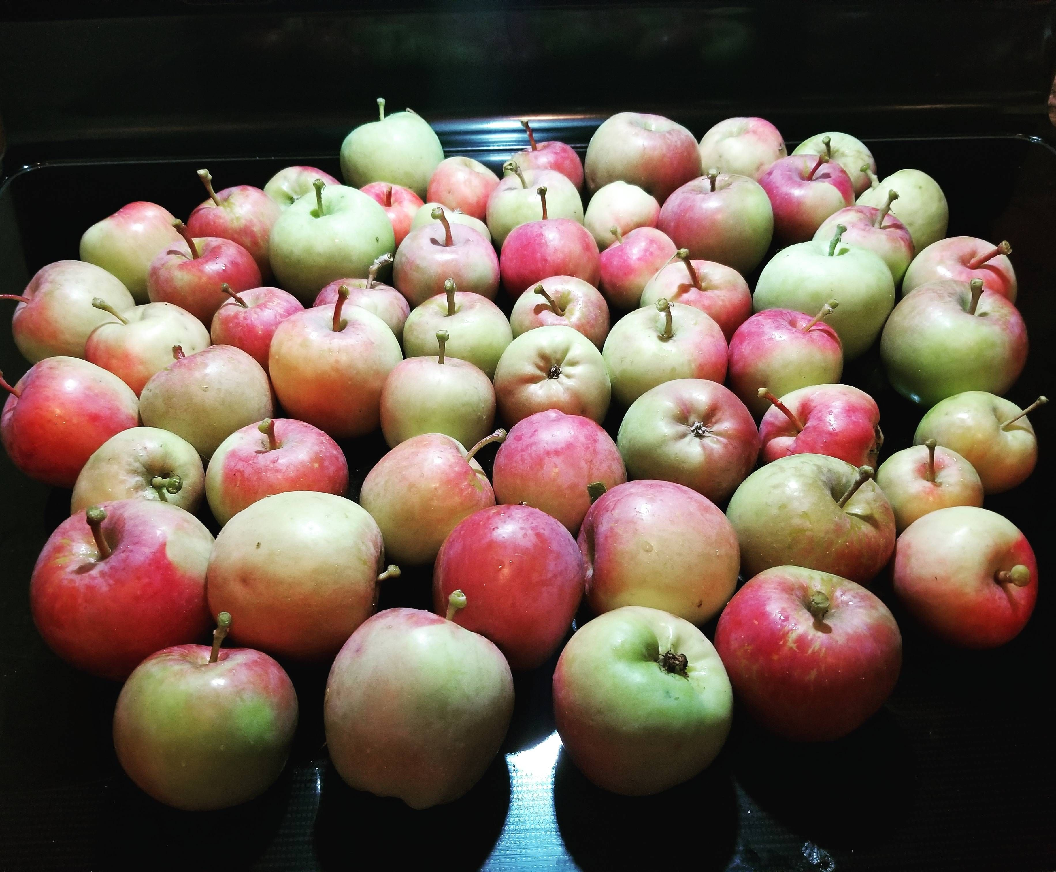 Year 3 From My 11 Fuji Apple Tree From Costco Gardening Garden