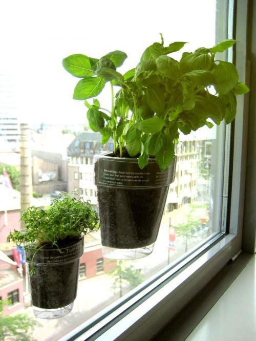 horta na janela