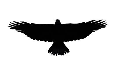 eagle silhouette google search feather fonts pinterest eagle rh pinterest ca Silhouette Tattoos for Men Small Eagle Tattoos for Women