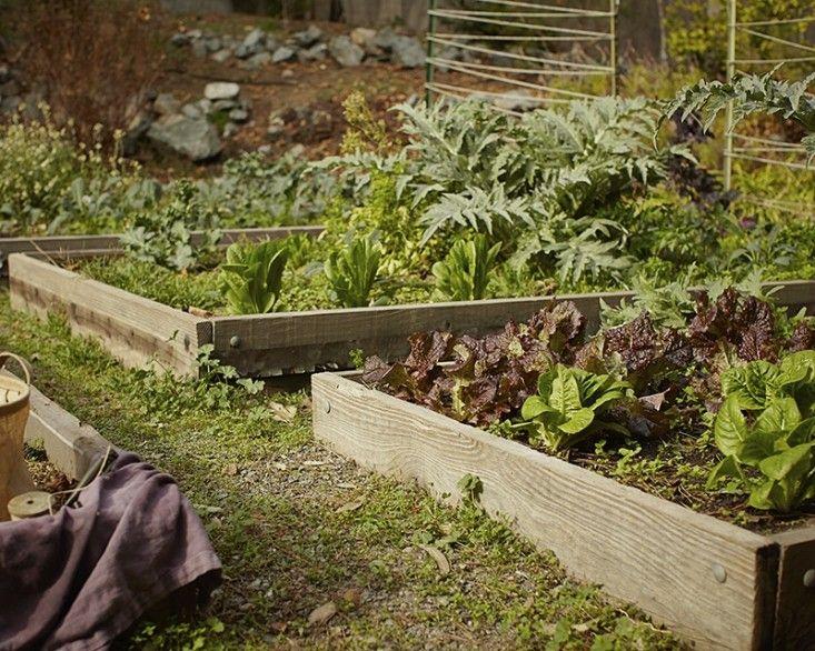 garden visit at home with mollie katzen in berkeley