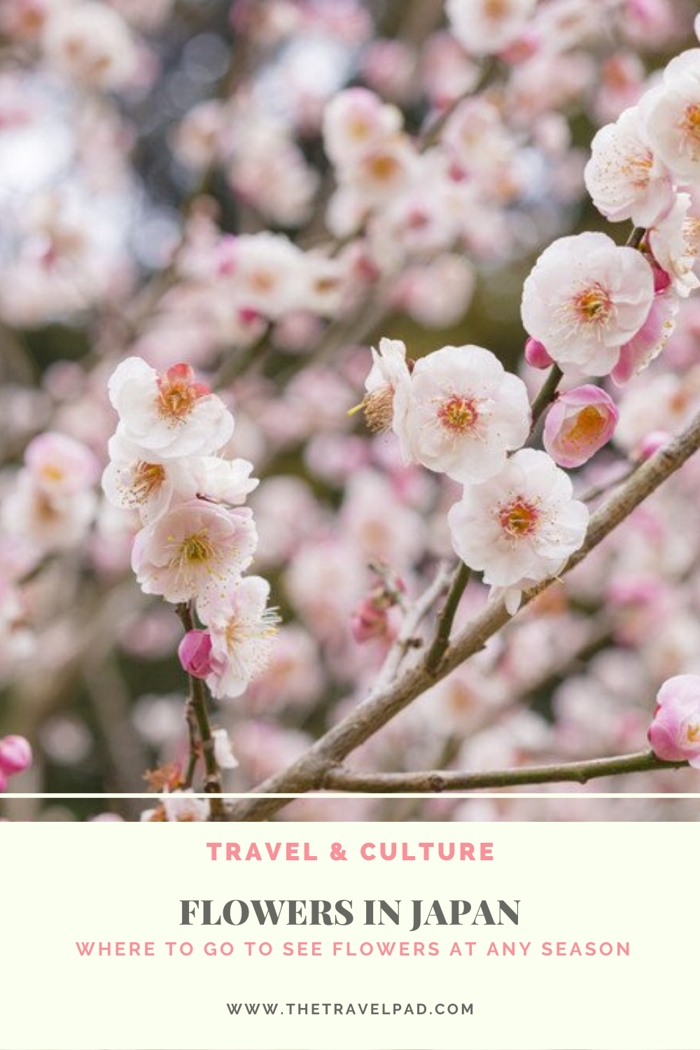 Flowers In Japan Where You Can See Flowers At Any Season Flowers Blossom Trees Japan
