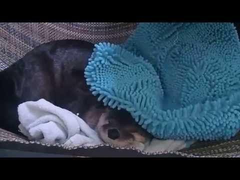 Dog Refuses To Sleep On Dog Bed