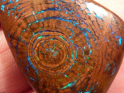 rocks geology minerals opal fossil earth porn petrified wood