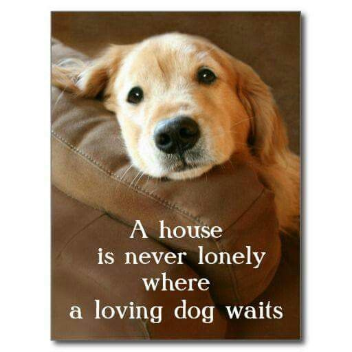 Pin By Jan Moutz On Dogs Dogs Dogs Golden Retriever Dogs Puppies