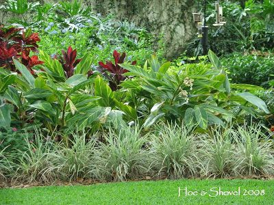 Landscape Ginger Variegated | view of a portion of the back planting looking from the front of it ...