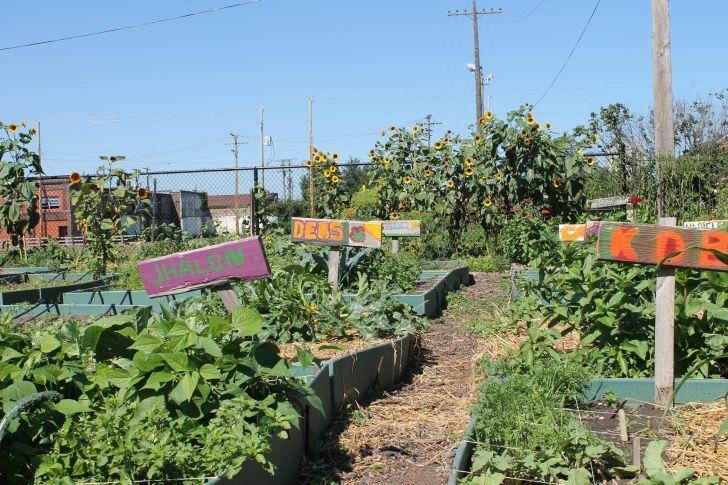 Government Farm Grants For Women   homestead dream