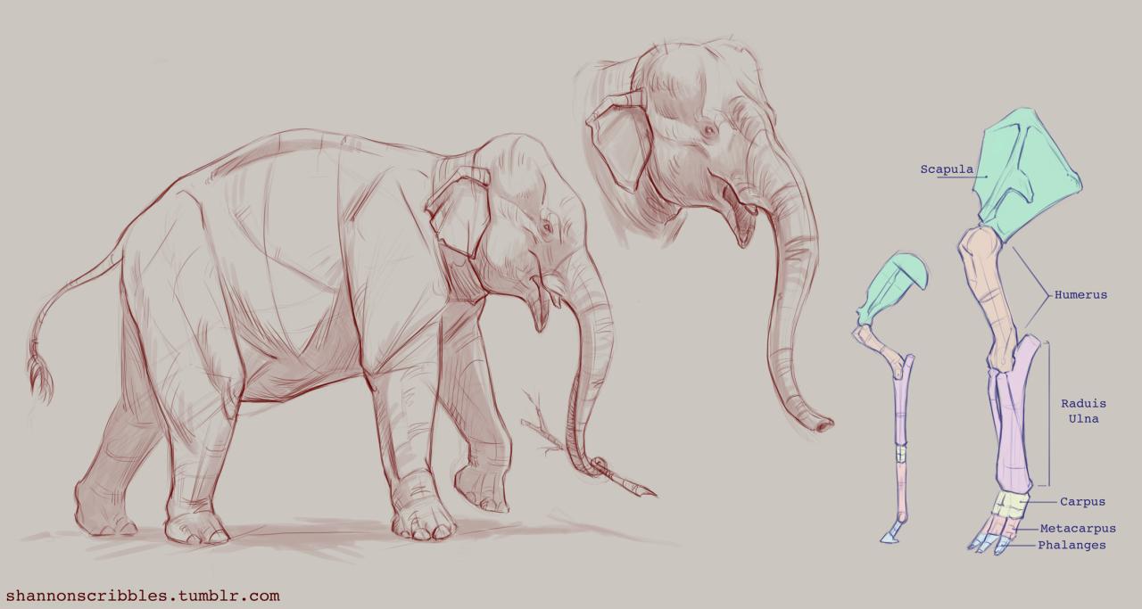 Scribbles. : Photo | Elephant | Pinterest | Anatomía animal ...