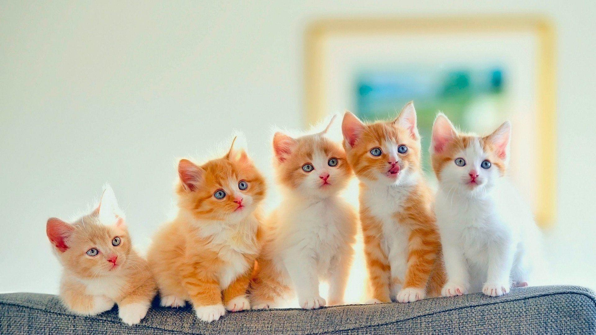 Iphone X Wallpaper Live Custom Golden Kitten Wallpaper Wallpaper Kitten Wallpaper