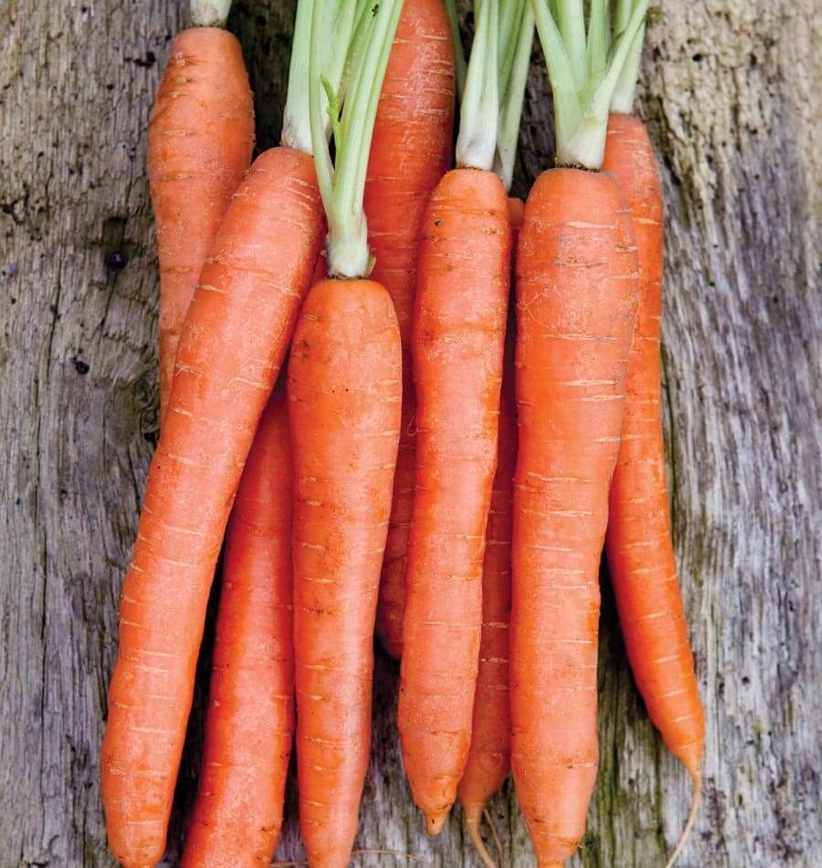 Nantes Coreless Carrot Seeds carrots have strong tops, smooth orange roots and are a sweet flavour carrot. These Carrots Hold Well In The Garden.