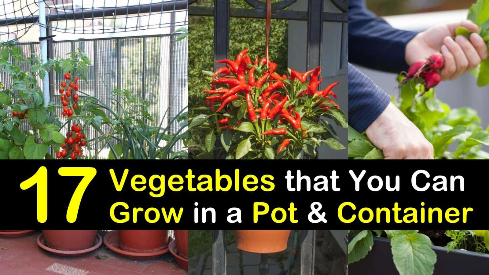 Photo of 17 Vegetables that You Can Grow in Pots and Containers