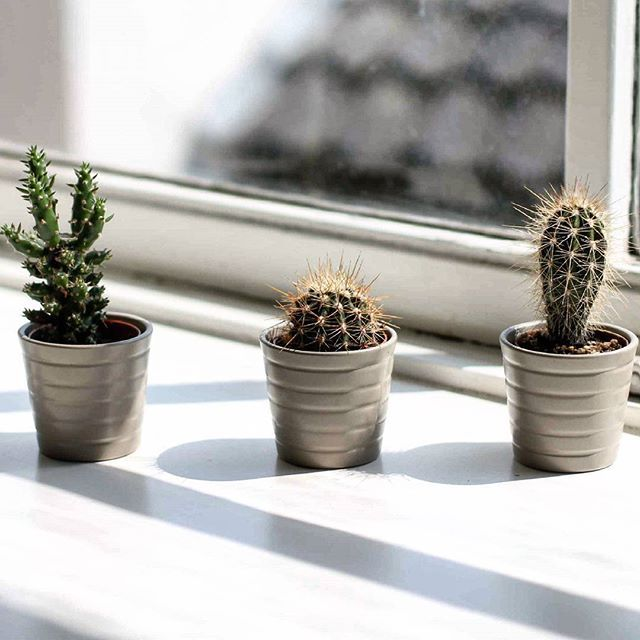 Cosy Homeoffice: Home Is Where My Cactus Is! Simple But So Cosy ! My Litt E