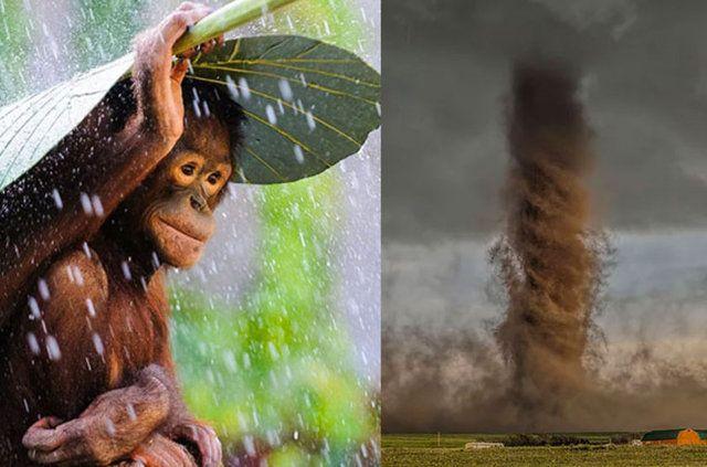 """13 bin fotoğraf arasından seçildiler 2015 National Geographic Fotoğraf Yarışması'nda kazananlar... 13 binden fazla fotoğrafın gönderildiği 16 Kasım'da başvuruları biten """"2015 National Geographic Fotoğraf Yarışması"""" kazananları açıklandı. İşte 'Doğa', 'İnsan' ve 'Yerler' başlıkları altında kazanan o fotoğraflar..."""