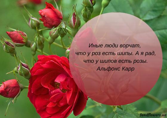 крепятся туфлям статусы про розу с картинками выделите несколько