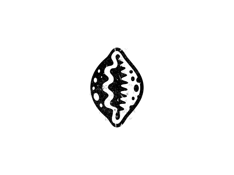 Cowry Shell Shell Tattoos Cowry Shell Shell Graphic