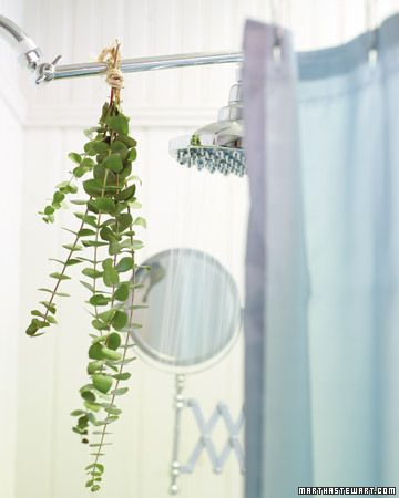 Natural Aromatherapy.  Try hanging a bundle of eucalyptus from your shower curtain rod. The heat and steam help to activate the herb's essential oils, which can ease congestion.