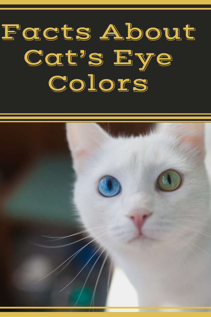 Do You Notice Cat's Eye Change Color? What Causes It Cat