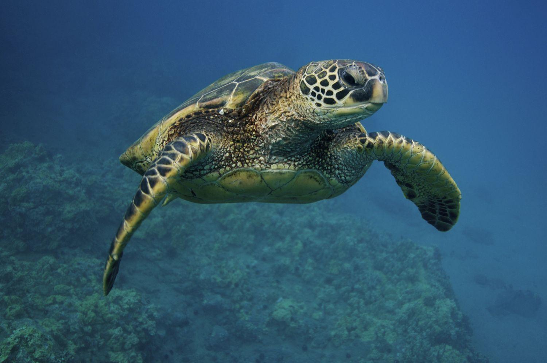 Sea Turtle Conservation Tours in Costa Rica | Go Here | Sea