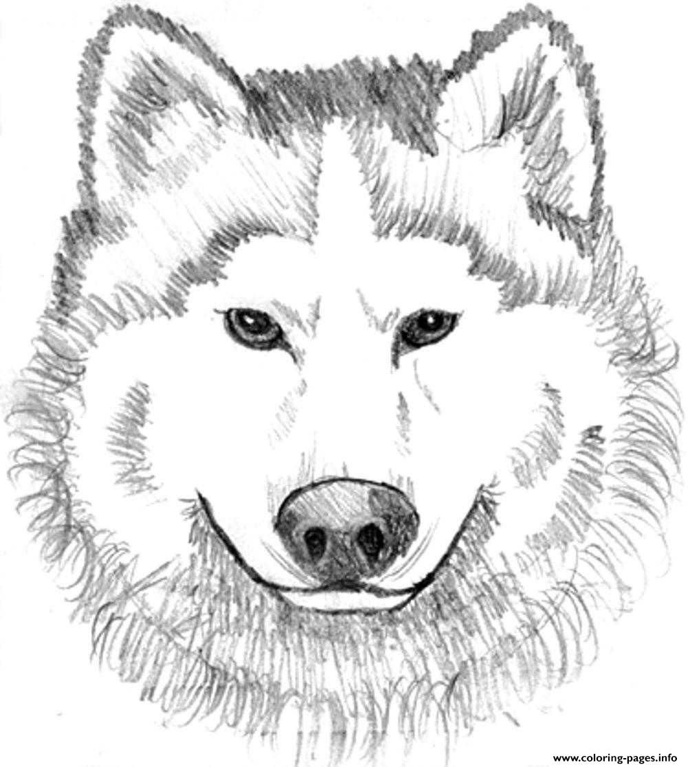 Print Realistic Wolf Face Coloring Pages Wolf Colors Dog
