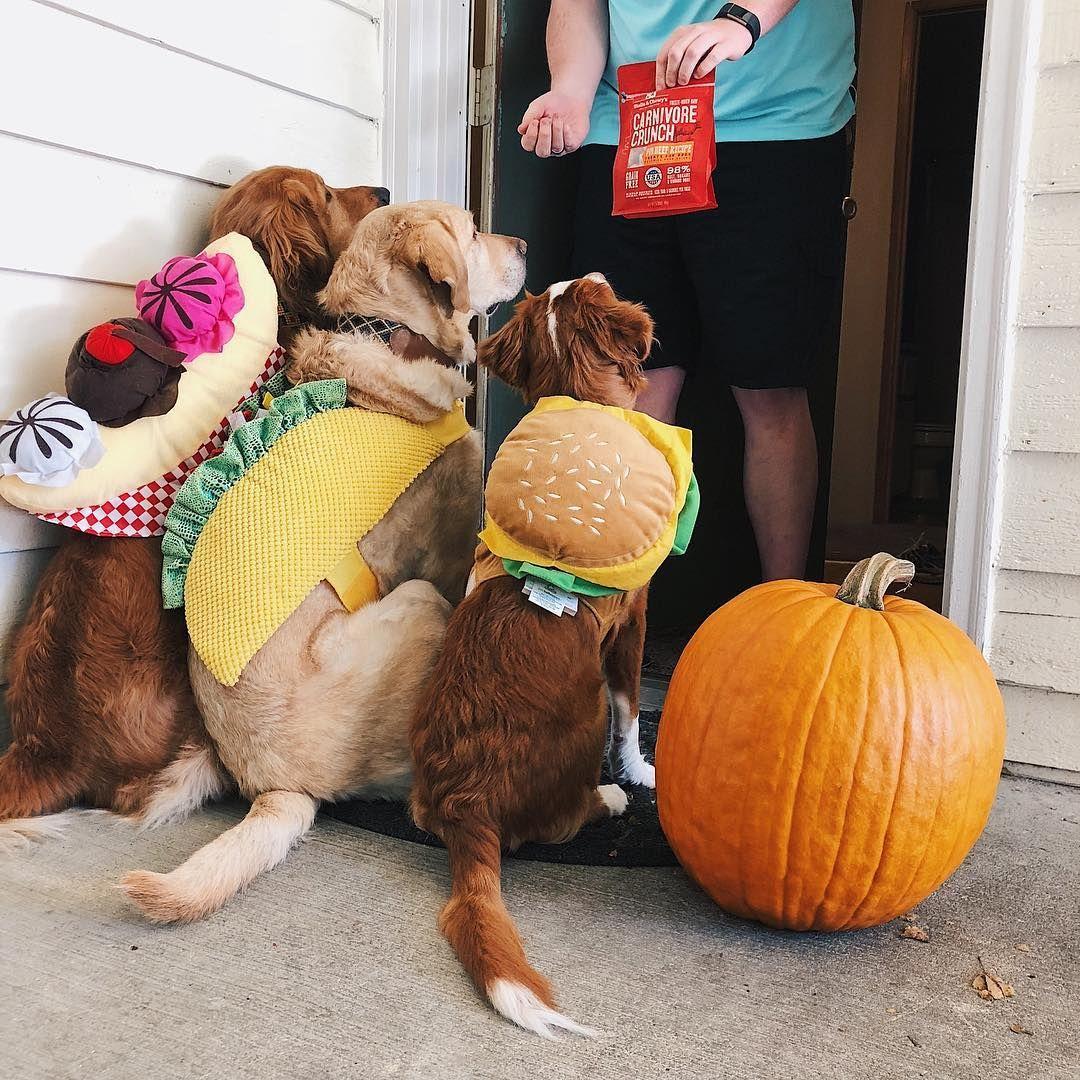 Trick Or Treat Dog Halloween Taco Sundae And Hamburger Dog