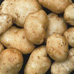 Kennebec potatoes days to maturity